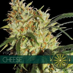 Vision Seeds Cheese 10 unids