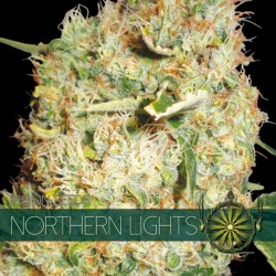 Vision Seeds Northern Lights 3 unids