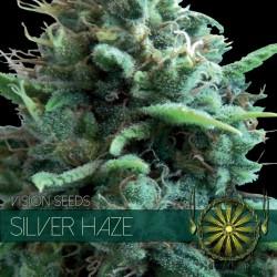 Vision Seeds Silver Haze 10 unids