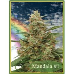 Mandala Seeds Mandala1 10 unids (R)
