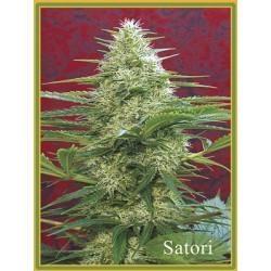 Mandala Seeds Satori 10 unids (R)