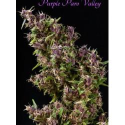 Mandala Seeds Purple Paro Valley 3 unids