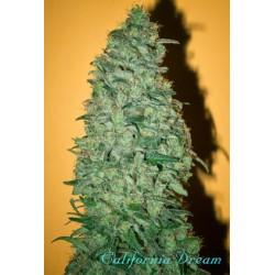 Mandala Seeds California Dream 3 unids